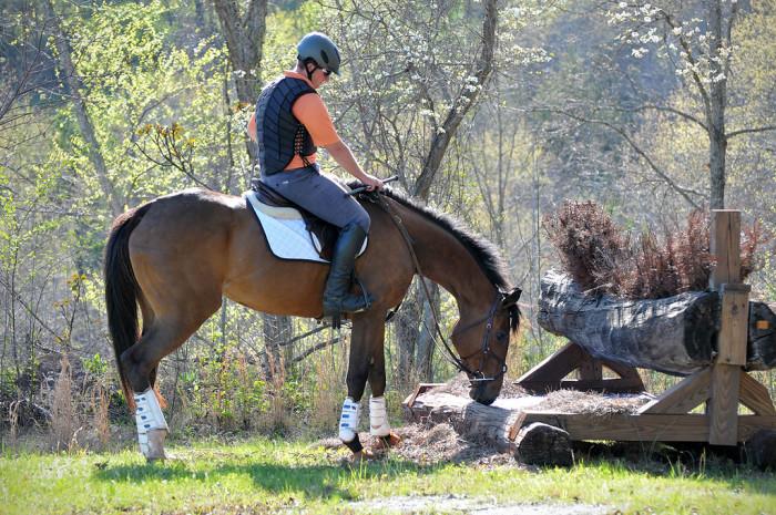younghorseprogram